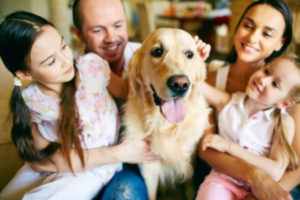 school for dog trainers, become a dog trainer, dog trainers school, dog trainer school, dog trainer phoenix