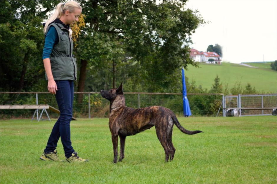 become a dog trainer, dog trainer school phoenix