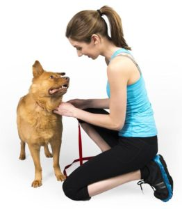 school for dog trainers, become a dog trainer, dog trainers school, dog trainers phoenix