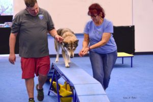 dog trainer tips, client communication for dog trainers