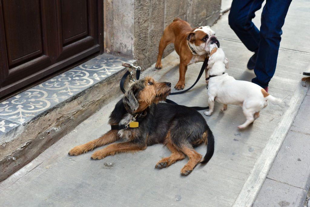 social, dog socialization, az dog smart, jessa parker