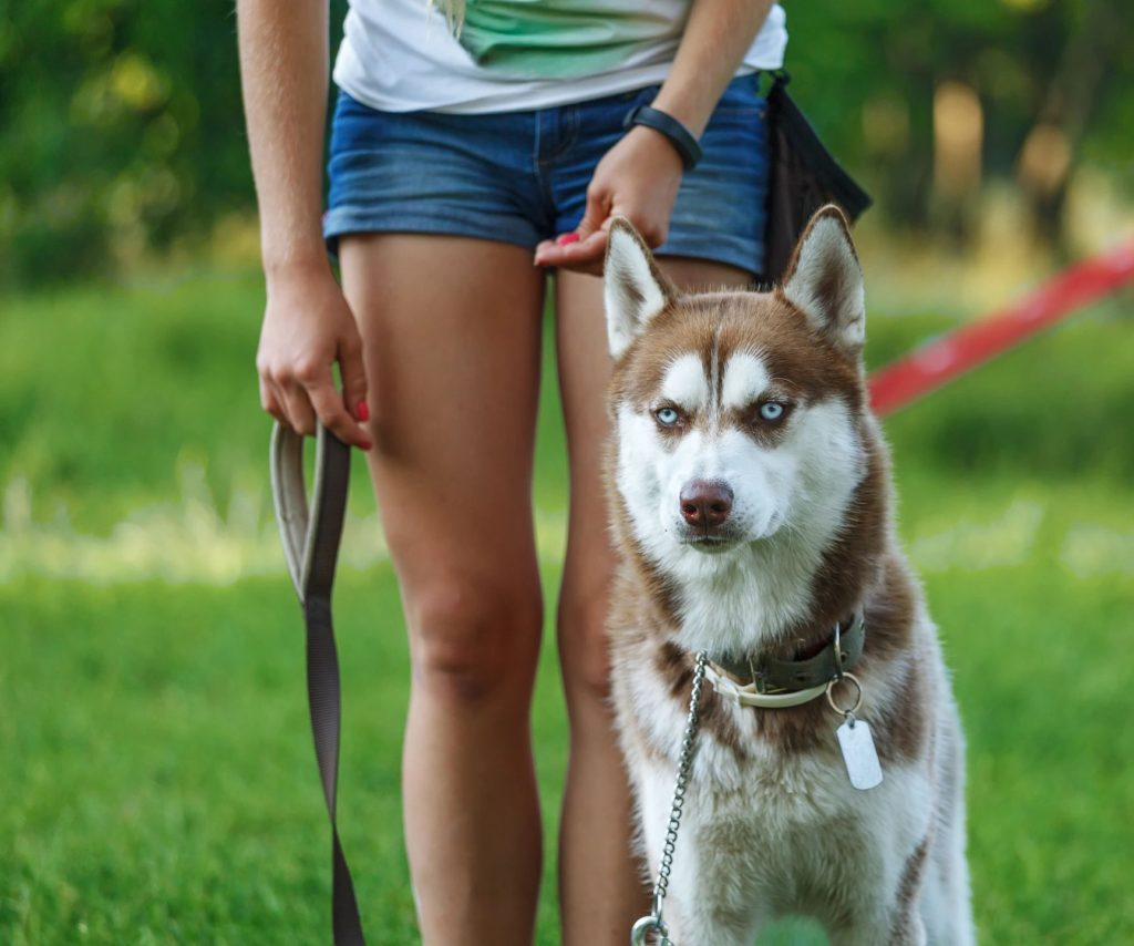 being a dog trainer, how can i become a dog trainer, az dog smart academy