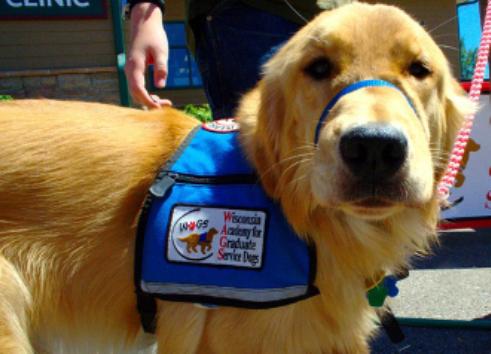 Dog Training School Phoenix Az