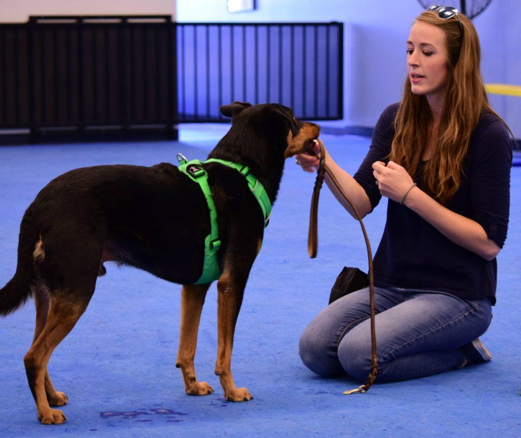 dog trainer apprentice program, az dog smart academy, schools for dog trainers
