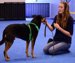 Dog trainer blog, service dog, therapy dog