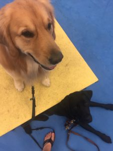 learn train dog, learn how to train your dog, games with dogs, az dog smart