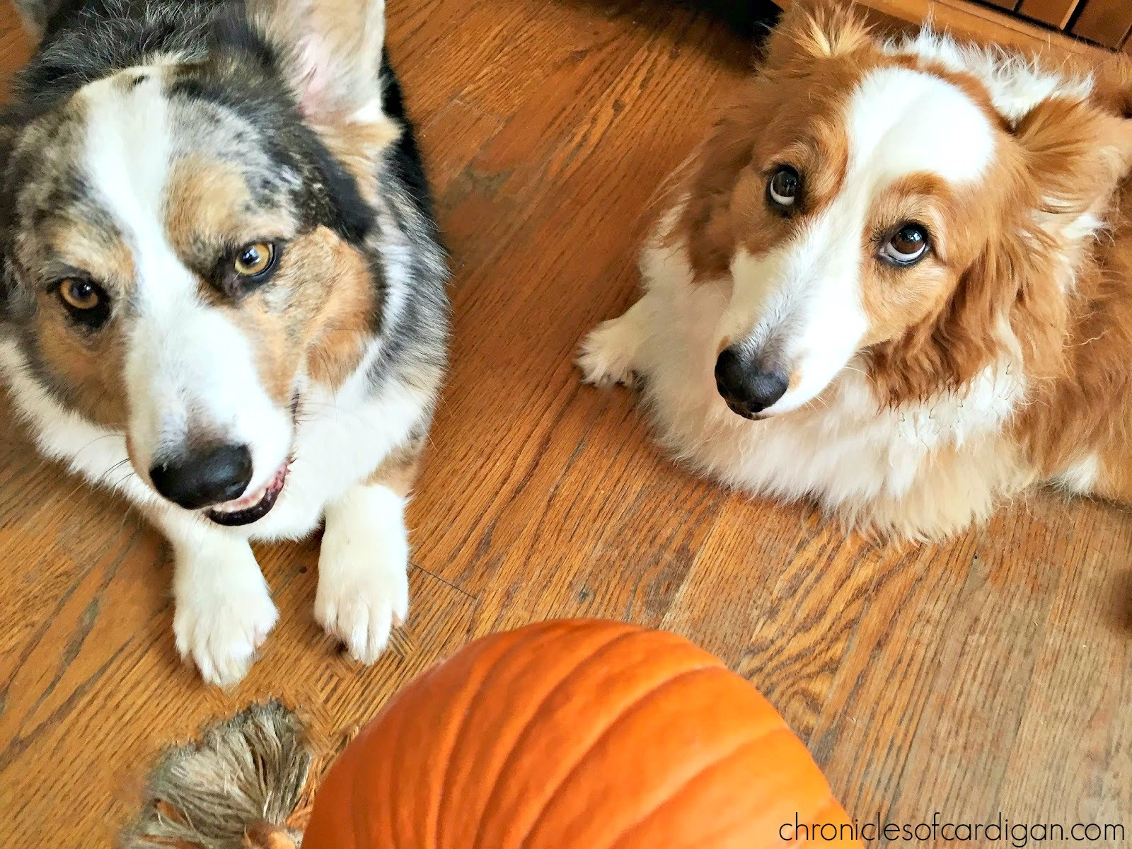 10 Tips for Bringing a New Dog Into My Household