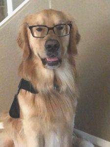 dog trainer training, az dog smart academy