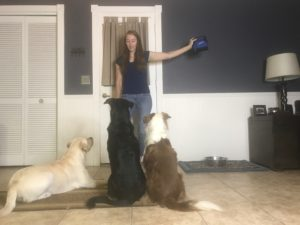 proofing your dog, az dog smart, az dog sports