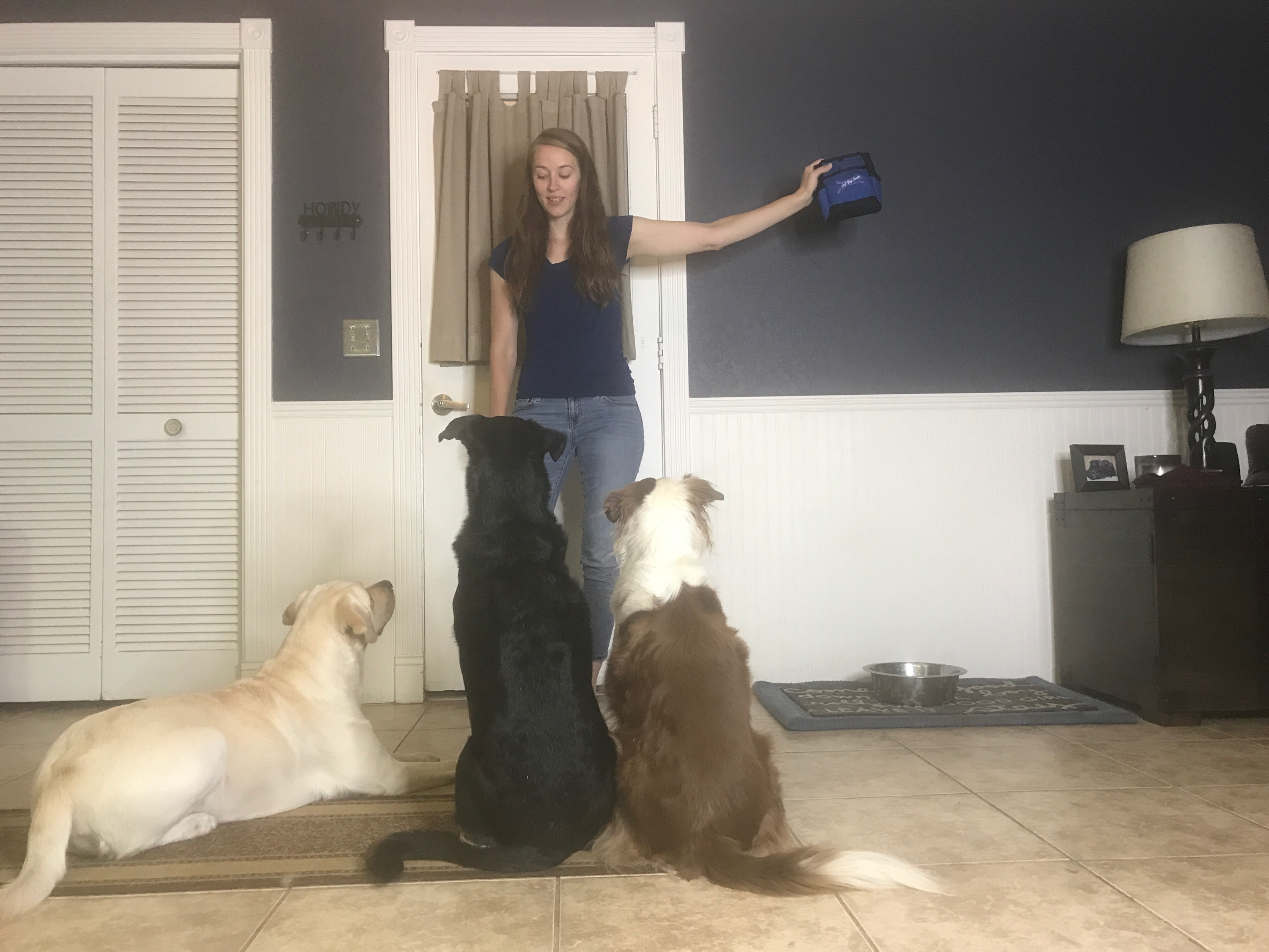 Proofing your dog – The proof is in the training…