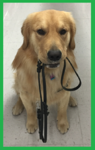 service dog, therapy dog, service, assistance, dog training, dog trainer