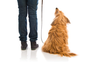 professional dog trainer, focus, az dog smart