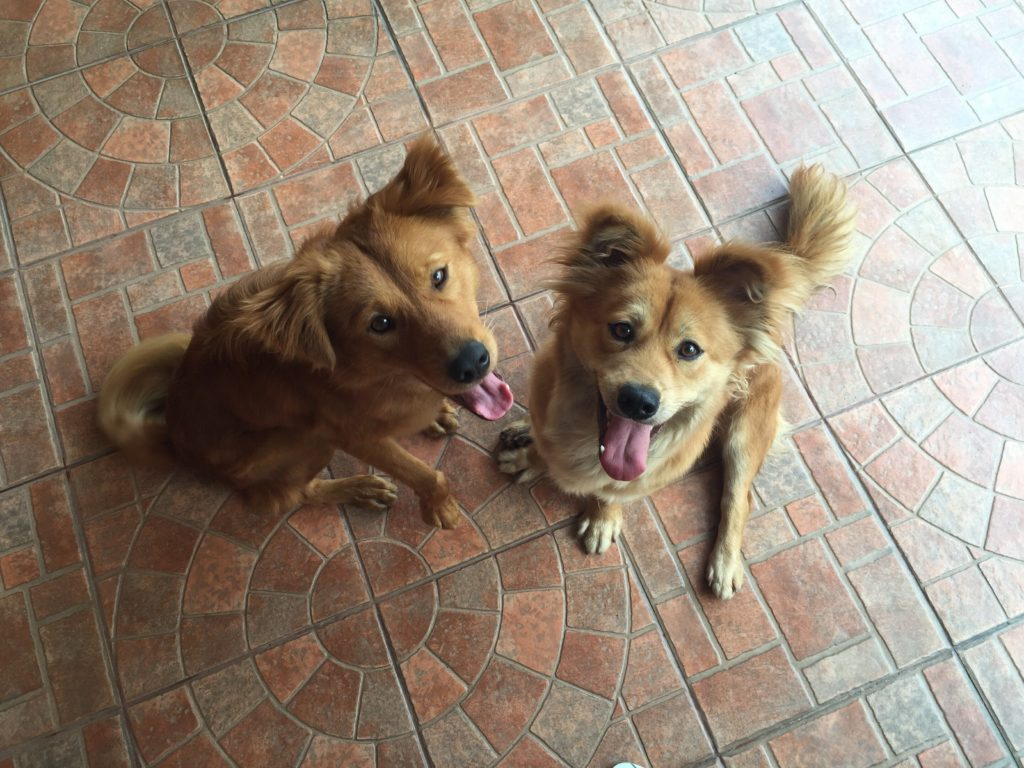 getting my dog to potty, az dog smart, dog trainer
