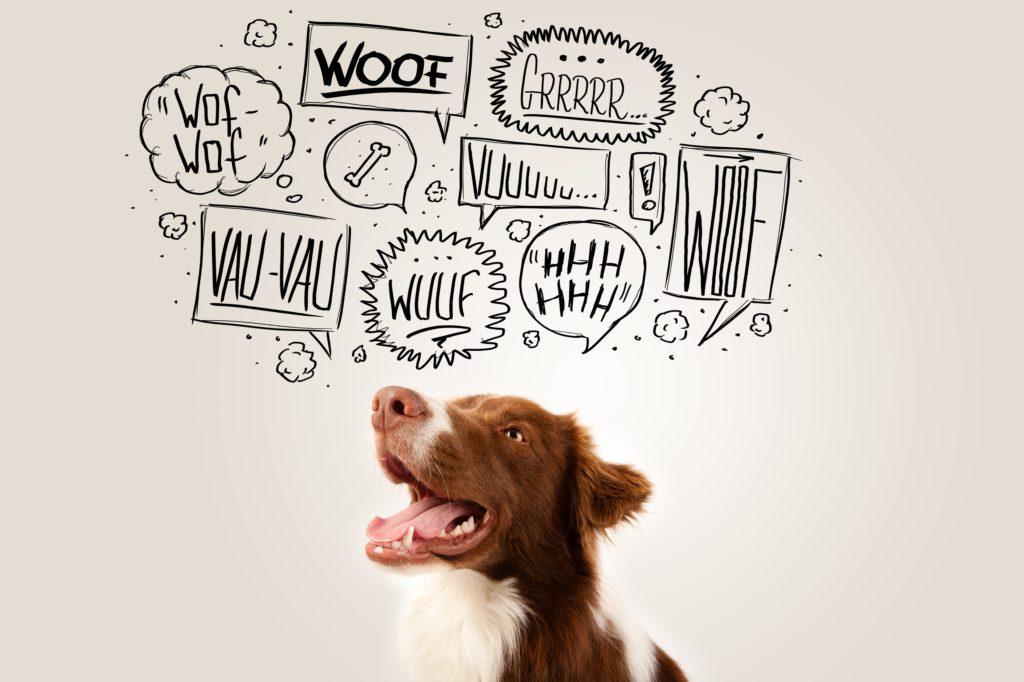 dog's bark, az dog smart, az dog sports