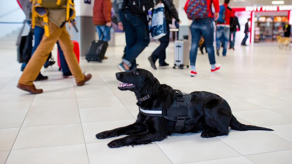 types of service dogs, az dog smart, service dog training