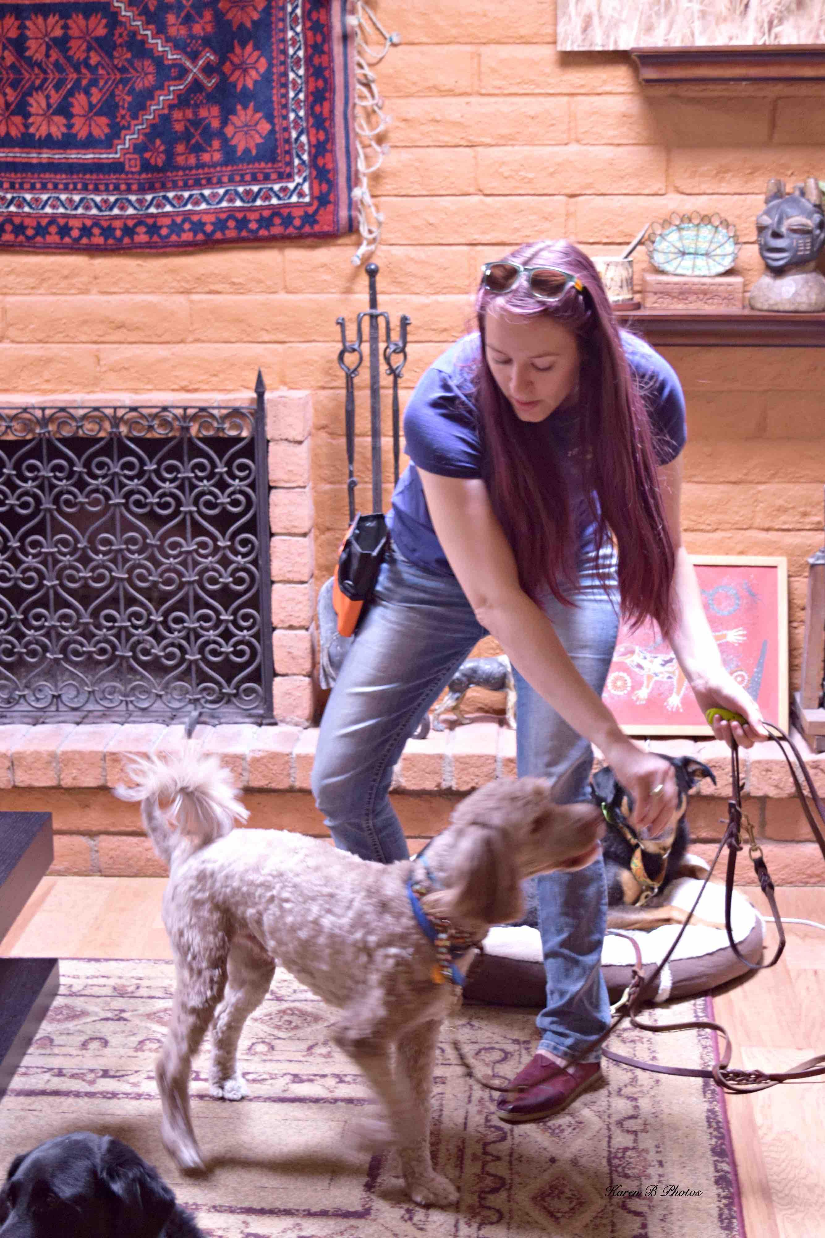 service dog workshop, jessa parker, az dog smart, dog trainer academy